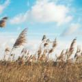 新時代『風の時代』の最重要セルフマネジメント